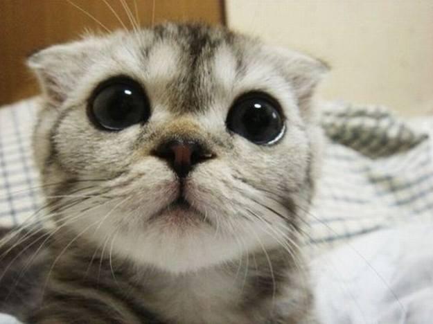 come eliminare odore pipì gatto